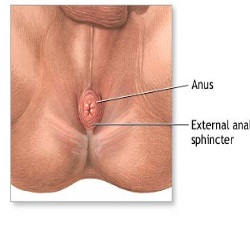 anus Dimple and vagina between