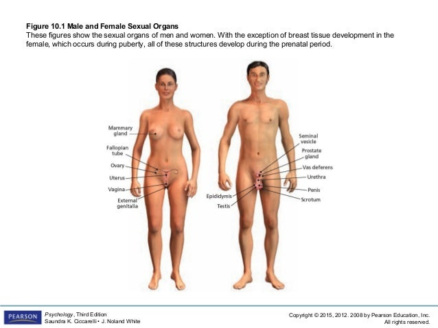 Nude transgender with male female organs